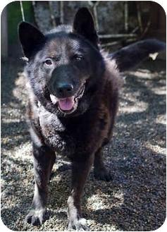 Labrador Retriever Mix Dog for adoption in Portland, Oregon - Rocky