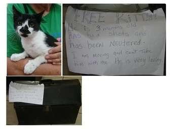 Domestic Shorthair Kitten for adoption in Haughton, Louisiana - Dollar