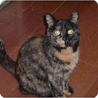 Adopt A Pet :: Boo - Washington Terrace, UT