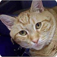Adopt A Pet :: Roberta - Annapolis, MD