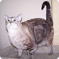 Adopt A Pet :: Apple - Colorado Springs, CO