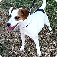Adopt A Pet :: Steve - Harrah, OK