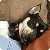 Adopt A Pet :: Aaru