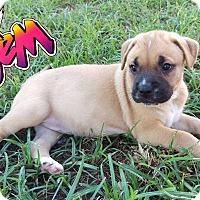 Adopt A Pet :: Jem - Houston, TX
