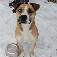 Adopt A Pet :: Cooper - Greensboro, NC