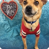 Adopt A Pet :: Riley - Lake Elsinore, CA