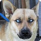 Adopt A Pet :: Jock