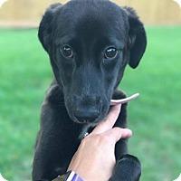 Adopt A Pet :: Mariah - Lake Jackson, TX