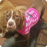 Adopt A Pet :: Klohe - Savannah, GA