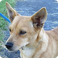 Adopt A Pet :: Cocoa - Germantown, MD