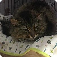 Adopt A Pet :: Scout - Mount Laurel, NJ
