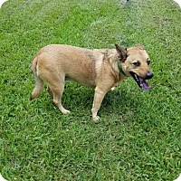 Adopt A Pet :: Chevy - Pearland, TX
