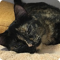 Adopt A Pet :: Letti - Lloydminster, AB