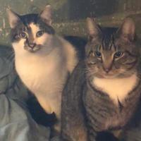 Adopt A Pet :: Barkley - Salem, OH
