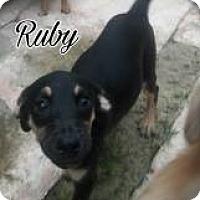 Adopt A Pet :: Rudy - Rexford, NY