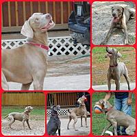 Adopt A Pet :: Grayson - Inverness, FL