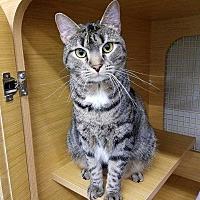 Adopt A Pet :: Midge - Youngsville, NC