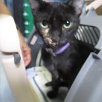 Adopt A Pet :: Tippy - Orlando, FL