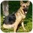Photo 4 - German Shepherd Dog Dog for adoption in Los Angeles, California - Skyler von Rowley