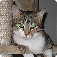 Adopt A Pet :: Ozzie - Fredericksburg, VA