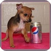 Adopt A Pet :: Diamond - Staunton, VA