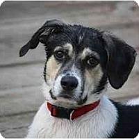 Adopt A Pet :: Darth Dallas - Columbus, OH