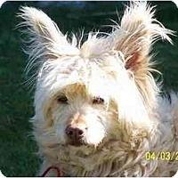 Adopt A Pet :: Bambi - Honaker, VA