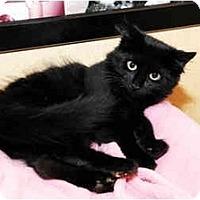 Adopt A Pet :: Salem - Farmingdale, NY