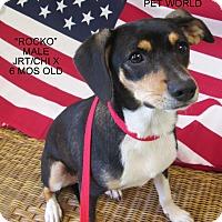 Adopt A Pet :: Rocko - Gadsden, AL