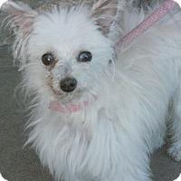 Adopt A Pet :: Destiny - Canoga Park, CA
