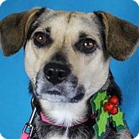 Adopt A Pet :: Mia - Minneapolis, MN