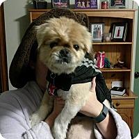 Adopt A Pet :: Bowie - Richmond, VA