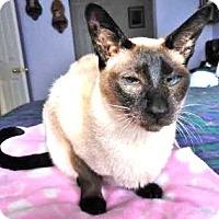 Adopt A Pet :: Cleopatra - Davis, CA