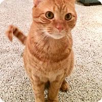 Adopt A Pet :: Pete - Colmar, PA