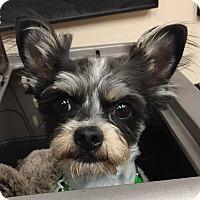 Adopt A Pet :: Penn-Charles - Los Angeles, CA