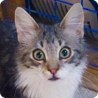 Adopt A Pet :: MacTavish - Davis, CA