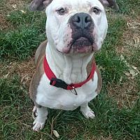 Adopt A Pet :: Titus - Concord, CA