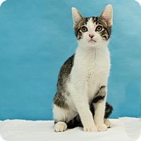 Adopt A Pet :: Beaker - Houston, TX