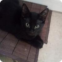 Adopt A Pet :: Luna 2 - Bulverde, TX