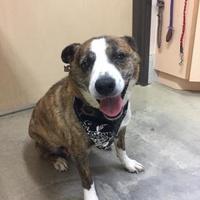 Adopt A Pet :: Lena - Frazier Park, CA