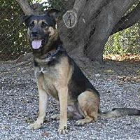 Adopt A Pet :: HANSEL - Goleta, CA