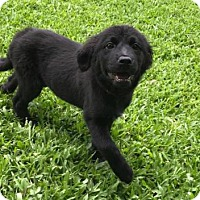 Adopt A Pet :: Jess - Bradenton, FL