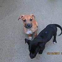 Adopt A Pet :: SOLOMON - Williston Park, NY