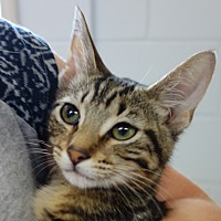 Adopt A Pet :: Reynolds - Greenfield, IN
