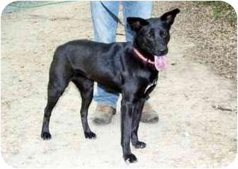 Labrador Retriever Mix Dog for adoption in Cleveland, Georgia - Skyler