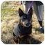 Photo 3 - Doberman Pinscher/Cardigan Welsh Corgi Mix Dog for adoption in No.Charleston, South Carolina - Poppy