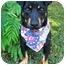 Photo 1 - Corgi/Miniature Pinscher Mix Dog for adoption in Niceville, Florida - Ralphie