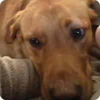 Adopt A Pet :: Moto CP - Dayton, OH