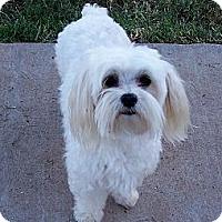 Adopt A Pet :: Sammy - San Angelo, TX