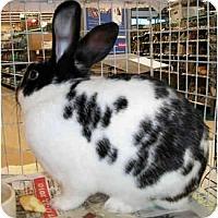 Adopt A Pet :: Puck - Dallas, TX